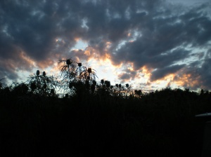 Dawn Cape Arid